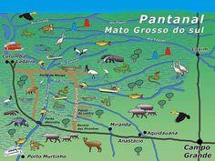 [Carlos Evangelista-Política Ambiental] O Pantanal mato-grossense é a maior planície de inundações contínua do mundo, formada principalmente pelas cheias do rio Paraguai e afluentes. A região tem …