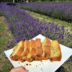 Xmas baking idea You may not know that dried Pacific Blue lavender buds is edible?😉  Just sprinkles some Pacific Blue buds onto your baking, then it would be lavender flavour. And delicious!❤️❤️❤️  www.lavenderbackyard.co.nz  #lavender #lavenderfarm #pyo #pickyourown #holidayfun #thingstodo #newzealand #hamiltonnz #christmasbaking #xmas #xmasbaking