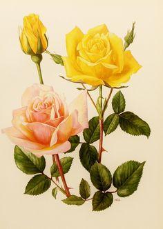 Винтажные иллюстрации: цветы, птицы. Обсуждение на LiveInternet - Российский Сервис Онлайн-Дневников