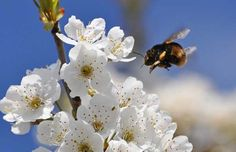 With continuing reports of honey-bee decline, would sulfoxaflor be yet another bee disaster waiting to happen?