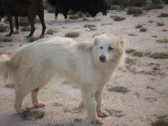 Diana una famiglia per lei dopo 7 anni di gabbia - http://hormiga.it/diana-una-famiglia-per-lei-dopo-7-anni-di-gabbia/ Adoption, Adozioni Cani, Adozioni urgentissime