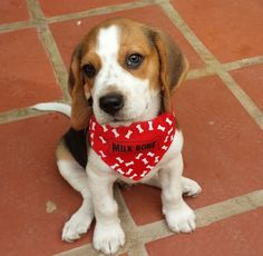 Beagles are my favorite.