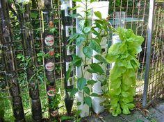 Faça uma torre de garrafas de plástico e despeje água no topo. Em poucas semanas, você vai comer da sua própria horta.