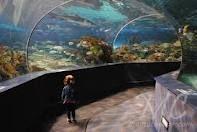 Ripley's Aquarium of the Smokies. Gatlinburg, TN.