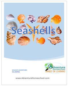 Seashells Unit Study