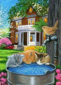 gattini bevono acqua