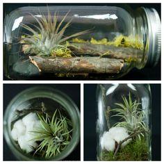 Designer's Choice Mason Jar Terrarium Mason Jar Terrarium, Terrarium Ideas, Mason Jars, Air Plants, Indoor Plants, Canning Jars, Cool Diy, Glass Jars, Houseplants