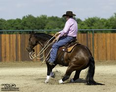 """Riding Exercise #16: Stop on Whoa  Goal: To get the horse to stop from all three gaits when you say the word """"whoa"""" without having to use the reins. You want your horse to act like there's an imaginary cliff in front of him and if he takes one more step after you say the word """"whoa,"""" he's going to fall off the edge of it.   More about the exercise: https://www.downunderhorsemanship.com/Store/Search/intermediate"""