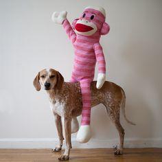 Maddie the Coonhound II / Theron Humphrey