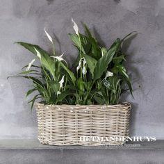 Rotan vensterbankmand ovaal Wicker Baskets, Plants, Home Decor, Decoration Home, Room Decor, Plant, Home Interior Design, Planets, Home Decoration