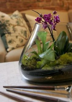 Design ideas, tips and how-to instructions for creating a terrarium with a personal touch. Plus, Web links to supplies and projects.
