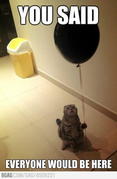 Sad Birthday Cat : ( sooo sad