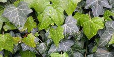 Top 6 plante care purifica aerul in orice casa