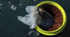 "The Seabin Project is a ""automated marina rubbish bin that collects floating rubbish, debris and oil 24/7."