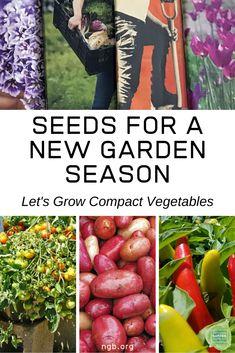 Seeds for a New Garden Season - Let's Grow Compact Vegetables - National Garden Bureau Indoor Gardening Supplies, Organic Gardening Tips, Container Gardening, Gardening Tools, Planting Vegetables, Growing Vegetables, Vegetable Gardening, Vegetable Garden For Beginners, Gardening For Beginners