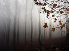 archenland:    Nieblas matutinas (by toalafoto)