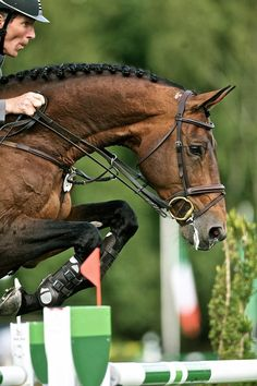 Ludger Beerbaum (suppose) with some absolutely gorgeous horse