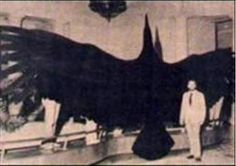 Unexplained Photos Of Creatures | Interestingly, Keel's writings prompted a memory from W. Ritchie ...