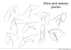 Only for personal use. TRACING IS NOT ALLOWED This isn't a lineart to color, this is detailed sketches of horse neck to practice horse anatomy. Body Drawing, Anatomy Drawing, Neck Drawing, Horse Drawings, Animal Drawings, Horse Head Drawing, Animal Sketches, Drawing Sketches, Sketches Of Horses