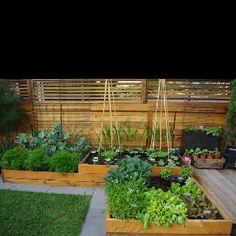 Pavers around raised garden beds
