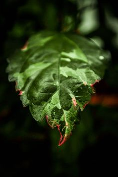 Leaf Photo by Anjali Seema Shukla -- National Geographic Your Shot