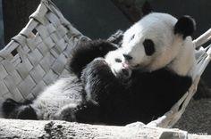 Bear <3 Hugs