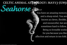 Celtic Animal Astrology: Seahorse (May 13 - June Celtic Zodiac Signs, Celtic Astrology, Astrology Numerology, Celtic Signs, Taurus And Gemini, Gemini Zodiac, Astrology Zodiac, Gemini Life, Celtic Animals