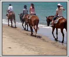 Horesback Riding in Nevis, West Indies - Ride along world famous Pinney's Beach