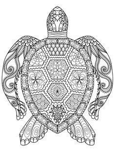 40 Best Turtle Coloring Pages Images Animal Coloring Pages Turtle