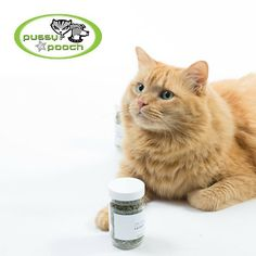 Pussy & Pooch Beverly Hills is hosting #MeowMingle this Thurs Sept 17, 6-8pm  // head over to their site to check out their exciting lineup for the night! 5 bottles of our Catnip Regular Cut will be up for grabs. Be sure to stop by if you're in the area! #catmeetup #beverlyhills