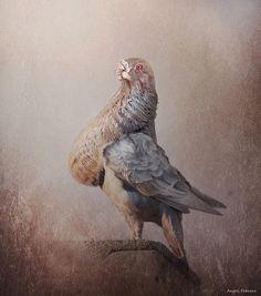Le Pigeon, Loft Design, Zentangles, Pakistan, Hobbies, Photos, Birds, Animales, Pigeon Breeds