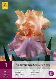 Iris Germanica Crazy for You kopen? Iris, Perennials, Flowers, Plants, Google, Perennial Plant, Bearded Iris, Shade Perennials, Lilies
