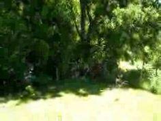 Casa Oregon en Coñaripe - video Chile, Lakes, Log Home, Viajes, Chili, Chilis