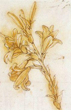 Lily by Leonardo da Vinci #art