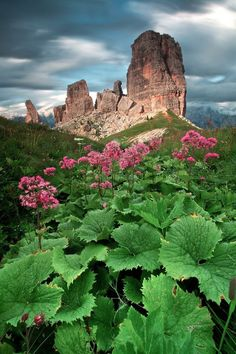 The Wild Side of the Dolomites