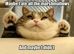 its alright, we all know the yummyness of marshmellows