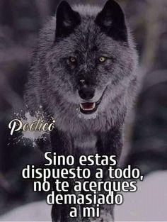 Wolf Craft, Qoutes, Life Quotes, Spirit Quotes, Wolf Love, Anime Wolf, Spanish Quotes, Werewolf, Best Quotes
