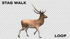 Stag Walk Animation