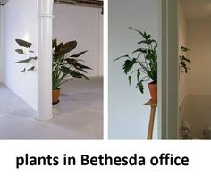 Plants in Bethesda's office