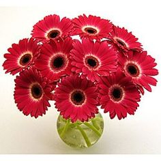 I LOOVEE hot pink gerbera daisies!!