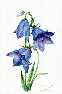 Watercolor Flowers, Watercolor Paintings, Original Paintings, Watercolours, Watercolor Paper, Botanical Illustration, Illustration Art, Blue Bells, Blue Bell Flowers