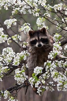Don't these blossoms flatter me?