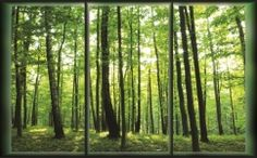 Bedroom Large Wallpaper Mural Summer Forest Green Trees Wall Decor for sale online Forest Wallpaper, Room Wallpaper, Photo Wallpaper, Wallpaper Murals, How To Apply Wallpaper, Forest Mural, Tree Wall Decor, Photo Tree, Green Trees