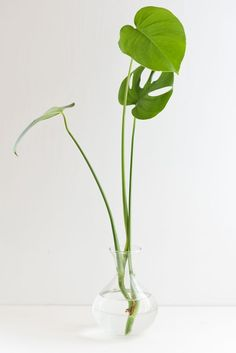 How to propagate plants. Step 2) The propagating process... Click through for 3 easy steps to plant propagation. #houseplant #propagation #plants