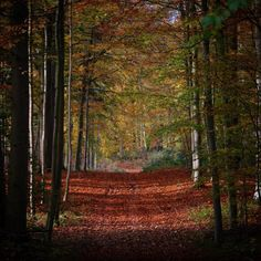 Efterår i skovene ved Brahesborg Gods  #assensnatur #visitfyn #fyn #nature #visitdenmark #naturelovers #nofilter #natur #denmark #danmark #dänemark #landscape #assens #motivation #mitassens #vildmedfyn #fynerfin #vielskernaturen #visitassens #instapic #fall #autumn #efterår #trees #oktober #forrest #opdagdanmark #brahesborg