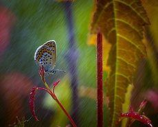 Под теплым дождиком июля ...