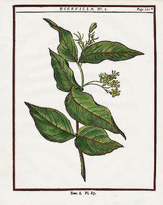 Mattioli Botanical Prints