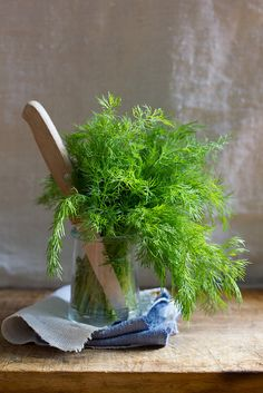 dill | egg & dart blog
