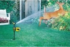 The best invention EVER to protect your garden and flower beds from deer.
