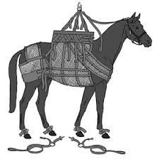 equine body sling - Google Search Horse Care, Horses, Google Search, Horse Grooming, Horse, Horse Nursery